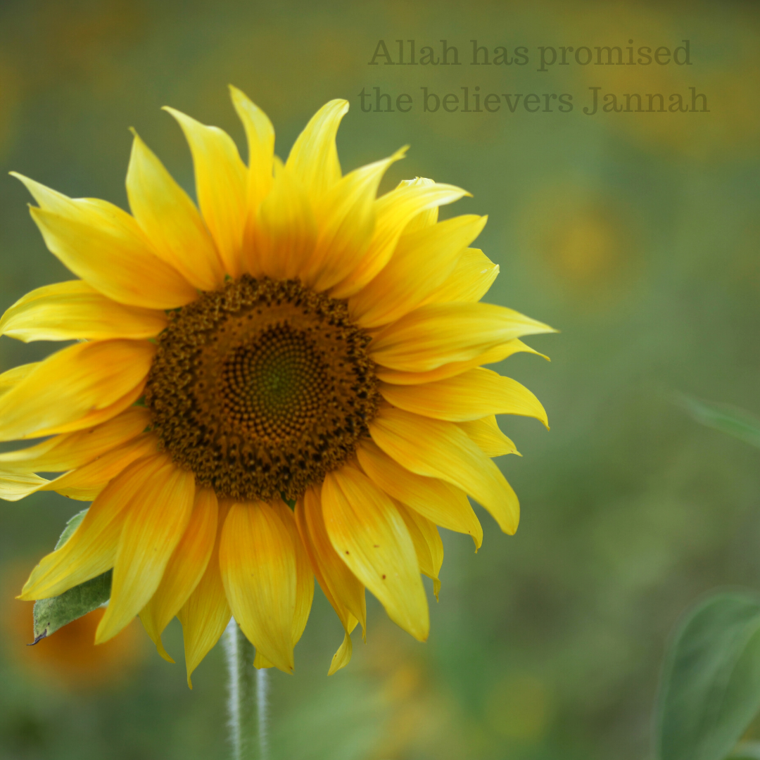 Allah Has Promised the Believers Jannah